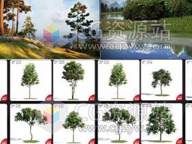 C4D MAX FBX OBJ高品质3D模型包树木丛林Evermotion Archmodels vol. 171