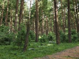40个专业高质量树木针叶树3D模型 Archmodels vol. 219
