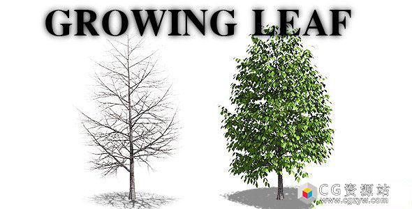 视频素材-树木树叶生长动画+透明通道